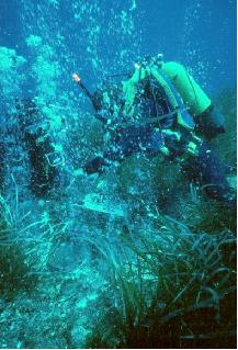 scuba diving in sicily