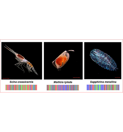 Zooplankton with Barcodes
