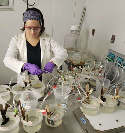 Kayla Mladinich adjusts tubes used to feed microplastics to shellfish